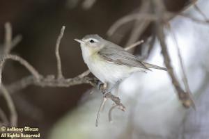 Photo taken at San Joaquin Wildlife Sanctuary, Irvine, CA on 4-25-14