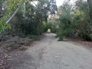Fidel Trail (unpaved) main dirt path