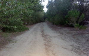 Fidel Trail (unpaved) section / dirt trail
