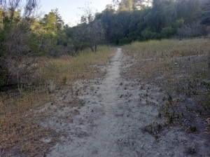 Fidel Trail - rear of park - meadow area / side trail