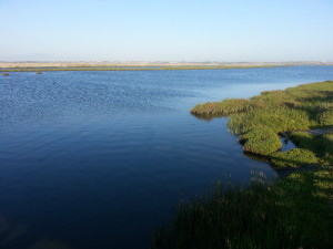 View from Bolsa Chica parking lot across wetlands