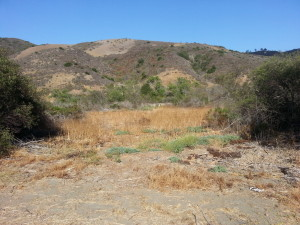 Aliso Woods Trail East