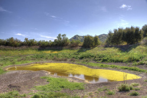 Dry Pond (pre drought) - Photo taken at Riley Wilderness Park in Coto De Caza, CA on March 12, 2012