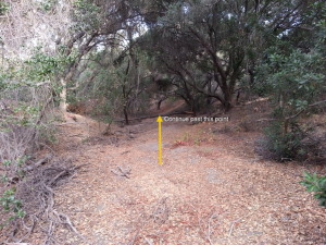 Hidalgo wilderness at intersection of Hildago and Mirador- Varied Thrush sighting, Mission Viejo November 23, 2014