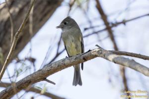 Photo taken at Hummingbird Park, Aliso Viejo, CA on February 8, 2015