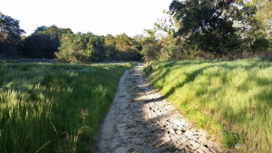 A portion of the Arroyo Trabuco Trail