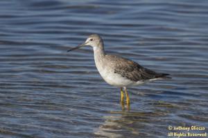 Photo taken at Bolsa Chica Ecological Reserve, Huntington Beach, CA on September 19. 2014