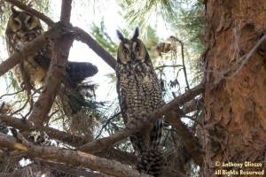 Photo taken at San Joaquin Wildlife Sanctuary, Irvine, CA on March 2016, 2016